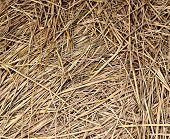 hay background