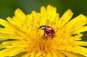 Abandon With Ladybug