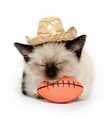 stock photo of baby cowboy  - Cute baby cat with football and cowboy hat on white background - JPG