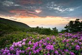 stock photo of wildflowers  - Blue Ridge Parkway Mountains Sunset over Spring Rhododendron Flowers Blooms scenic Appalachians near Asheville NC - JPG