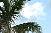 Palm Branches And Sky poster