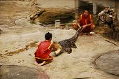 Crocodylidae Or Crocodile Show In Thailand