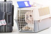 little dog in the airline cargo pet carrier waiting at the airport after a long journey poster