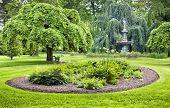 A Camperdown Elm (botanical name Ulmus glabra camperdownii) tree overlooks a perennial bed in a gree