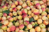 Ripe fresh apricots in outdoor market. Ripe spanish fruits. poster