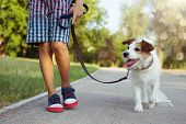 Dog And Child Walking At The Par With Blue Leash. Obedience And Friendship Concept. poster