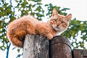 Looking Up At Serious Ginger Cat. Lying On A Pole. poster