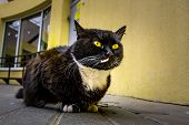 Portrait Of A Black Cat With Vivid Yellow Eyes poster