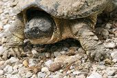 picture of the hare tortoise  - A big  - JPG