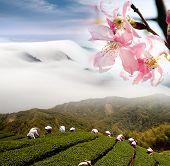 Постер, плакат: Ницца пейзаж с Сакура