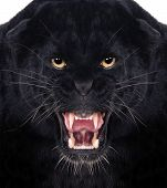 stock photo of sneak  - Direct frontal shot of a Black Leopard snarling with isolated background - JPG