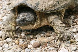 stock photo of the hare tortoise  - A big  - JPG