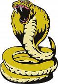 foto of king cobra  - Illustration of a cobra snake isolated on white background - JPG