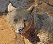 Big Bear posing for visitors in the park -  safari in Tel Aviv