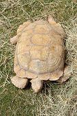 A beautiful Tortoise crawling