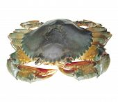foto of crustations  - Image set of Crab in isolated white background - JPG
