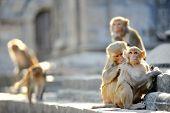 Monkey relationships
