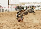 picture of bucking bronco  - bucking action during the saddle bronc riding competition at a rodeo - JPG