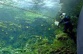 Aquarium - Scuba Diver