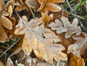 Frozen Autumn Leaves