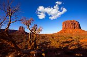 Monument Valley West Mitten and Merrick Butte with dried branches Utah