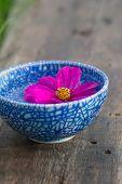 Floating Violet Flower