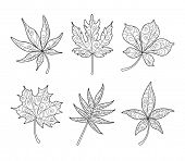 Patterned Maple Leaves in black and white