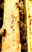 Bees build honeycombs. Material is a wax that they produce honey.