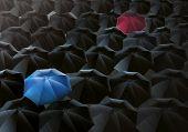 Umbrellas Drizzle