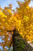 Blur Autumn Tree