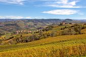 Autumnal vineyards with yellow grape leaves on the hills of Langhe in Piedmont, Northern Italy.