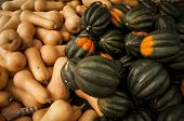 Butternut and acorn squash for sale