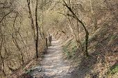 Path In The Fores