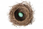 Brids nest with egg on white background