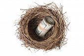 Bird's nest with money, cut out on white background