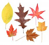 Variety of fall leaves