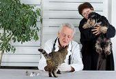 In Veterinary Infirmary