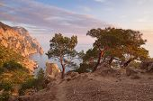 Evening landscape with beautiful sunshine. Pine forest on the rocks by the sea. Cape Aya, Crimea, Uk