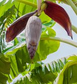 bananas tree flower and bee