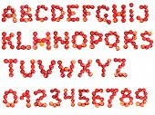 Letters and numbers alphabet of fresh red apple