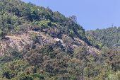 Mountain In Doi Inthanon National Park, Chiangmai  Thailand