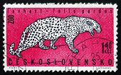 Postage Stamp Czechoslovakia 1962 Leopard, Zoo Animal
