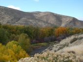 pic of yakima  - Fall colors along Yakima River in Yakima River Canyon on Highway 821 - JPG