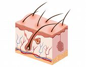stock photo of nerve cell  - illustration of human skin tissue is complete and exciting - JPG