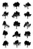 stock photo of weeping willow tree  - Weeping willow trees silhouettes isolated on white background - JPG