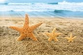 Conceptual image of three golden starfish in the sand overlooking a beautiful, turquoise ocean durin