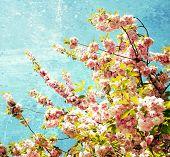 grunge spring cherry flowers