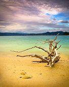 Tranquil Mountain Lake W/ Driftwood On Beach