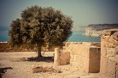 Ancient ruins of Curion in Limassol, Cyprus with a olive tree and sea