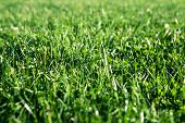 Green grass with water drops, close-up. Natural background